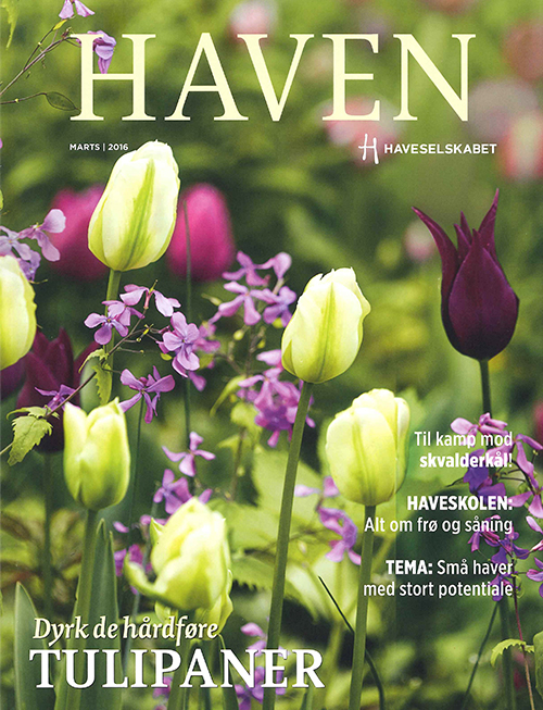 haven_tulp