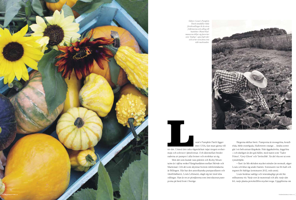 L-pumpkin2