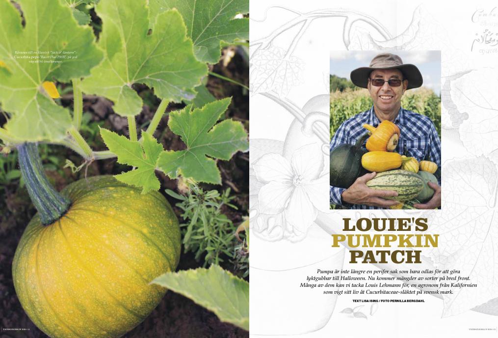 Louis-pumpkin1