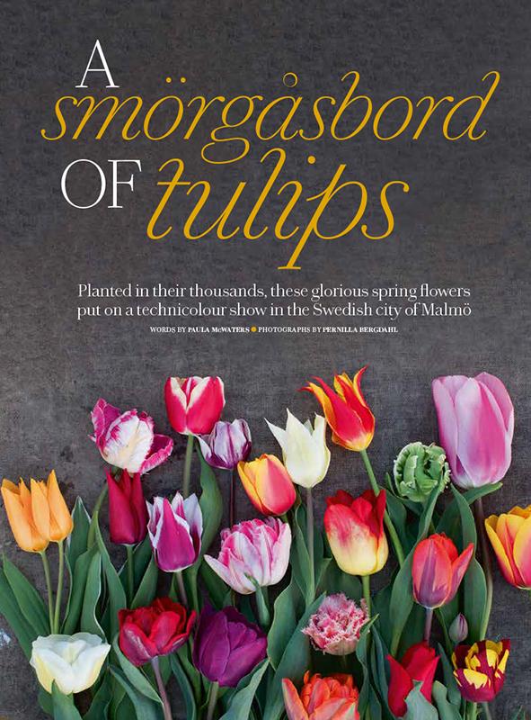 tulips_start
